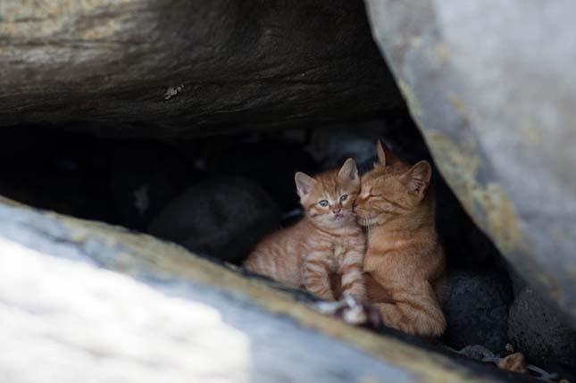 Macskák szigete