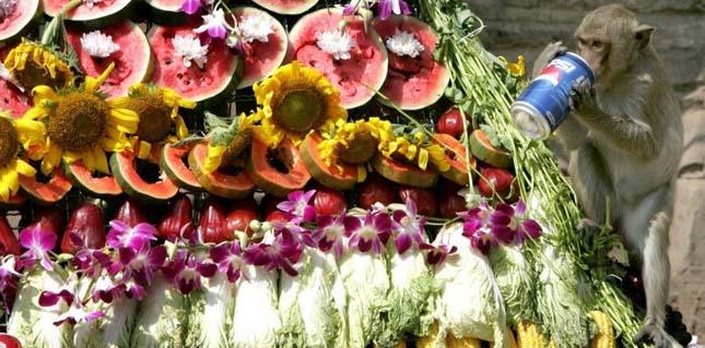 Majombüfé Fesztivál