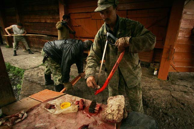 Kaukázusi gímszarvas