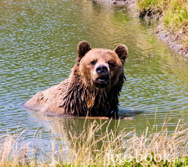 Veresegyházi medveotthon