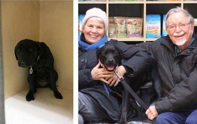 Megmentett kutyák