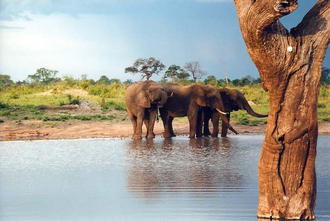 Ciánnal mérgeztek meg elefántokat