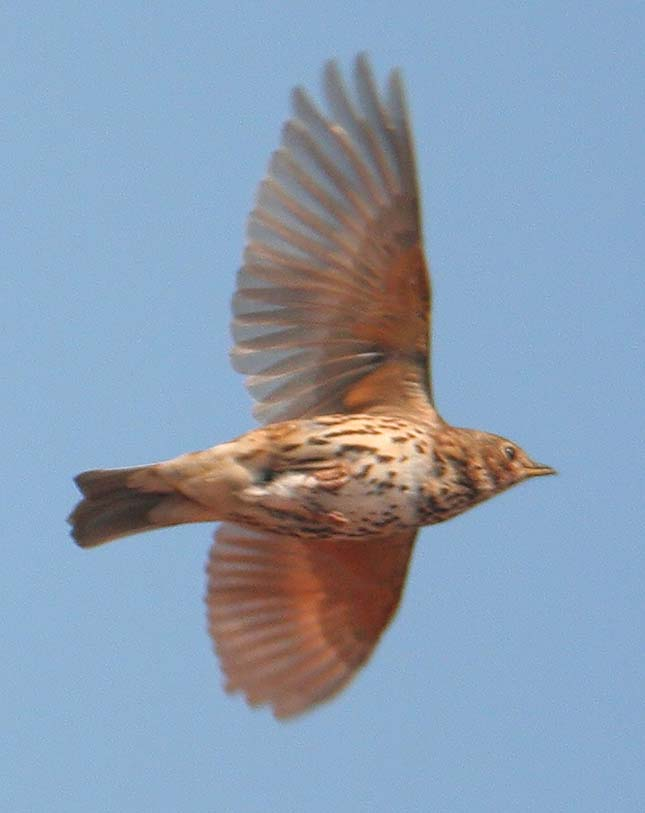 2 millió madarat öltek meg az orvvadászok Cipruson