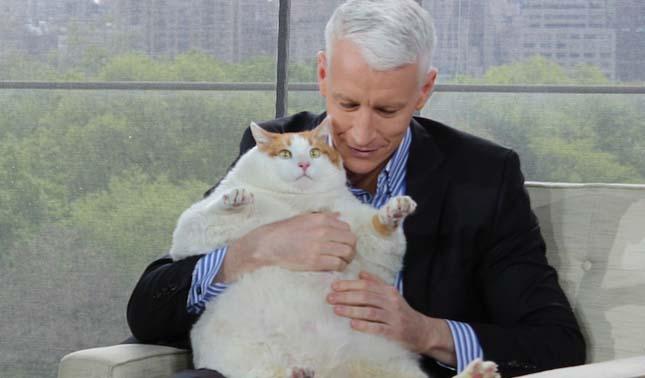 Meow, a legkövérebb macska