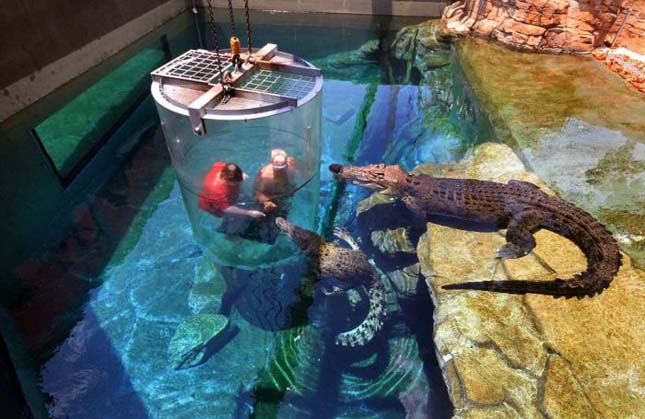 Merülés krokodilokkal