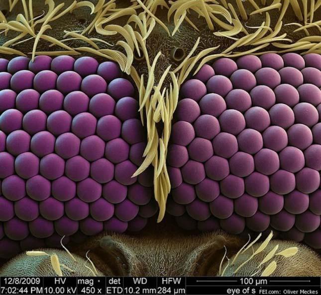 Mikroszkópikus élőlények