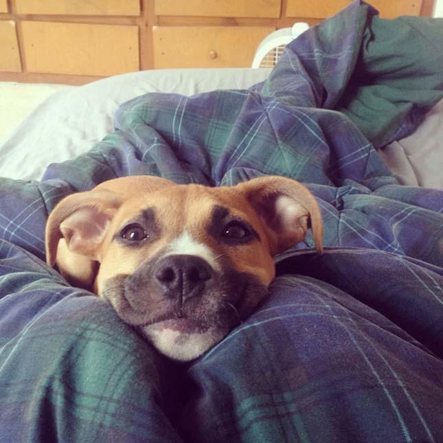 Mosolygó kutyák