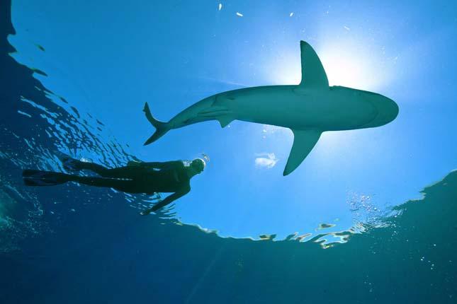 Úszás a nagy fehér cápával