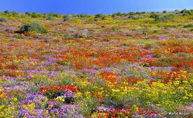 Csodálatos tavaszi virágok