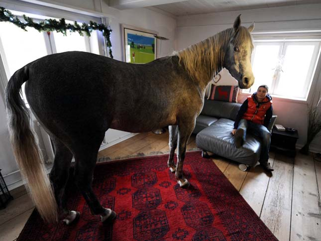 A házban élő ló