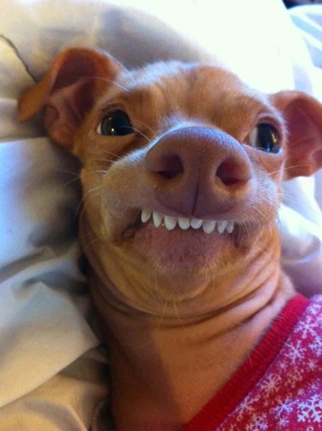 Az internet kedvenc házi állatai
