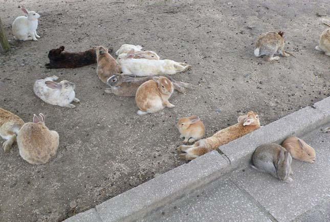 Nyulak szigete, Japán