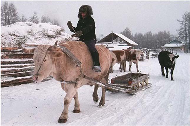 Ojmjakon, a világ leghidegebb faluja