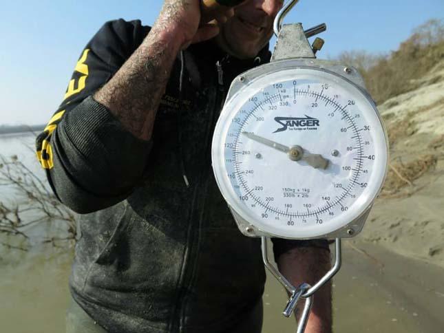 127 kilogrammos szürkeharcsa