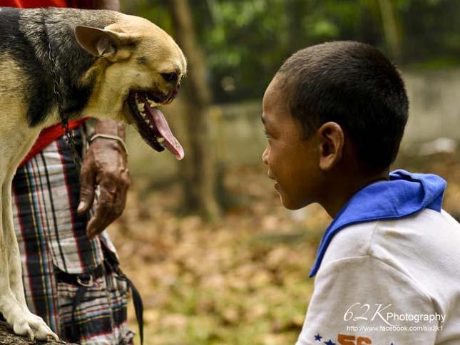 Kabang, az orr néküli kutya