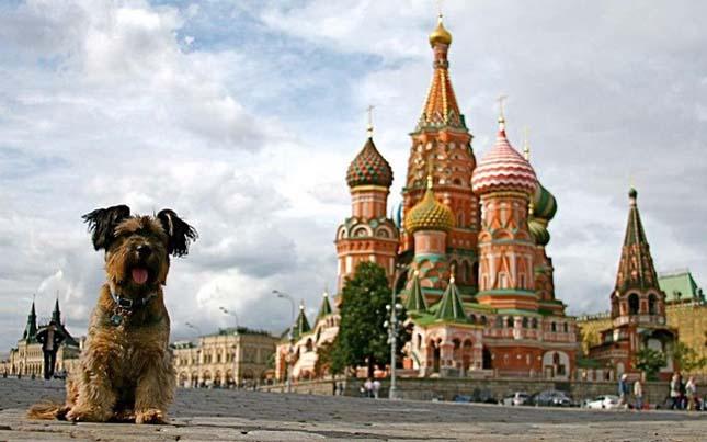 Oscar, a világutazó kutya