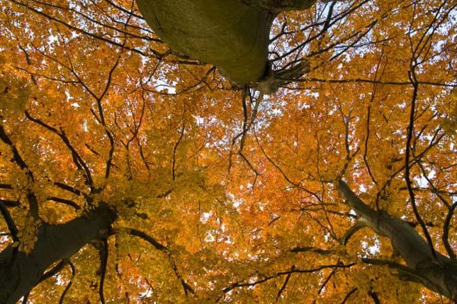 Őszi tájkép