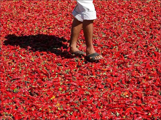 Pirospaprika szárítás Törökországban