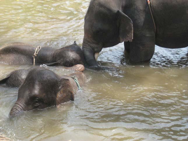 Patara Elefánt Farm