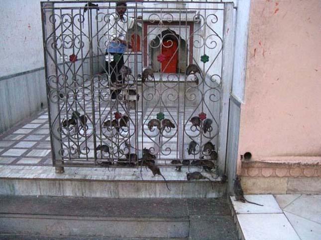 A patkányok temploma