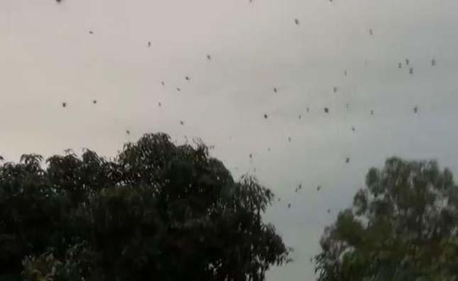 Több ezer pók szőtt hálót