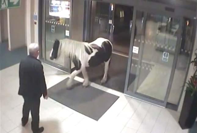 Póni sétált be a rendőrségre