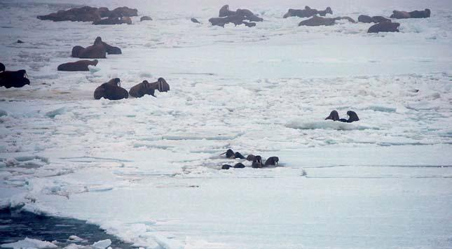 Bering-tenger