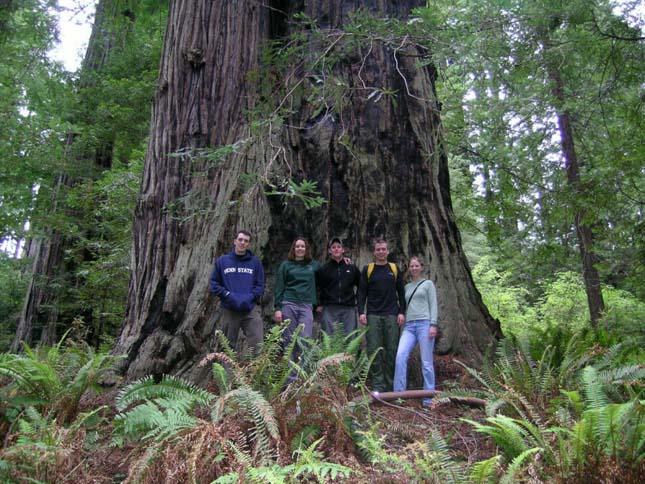Redwood Nemzeti Park