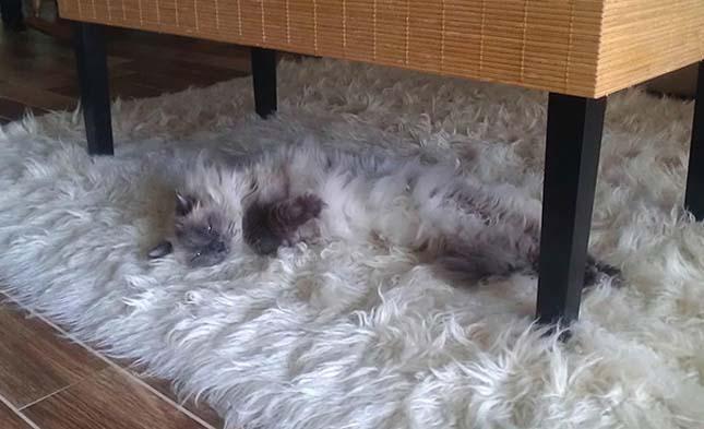 Rejtőzködő háziállatok