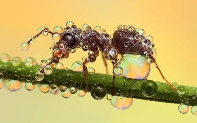 Bámulatos fényképek parányi rovarokról