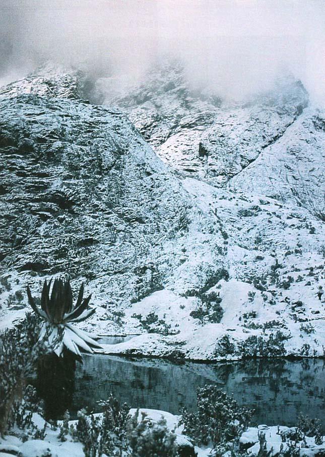 Rwenzori-hegység