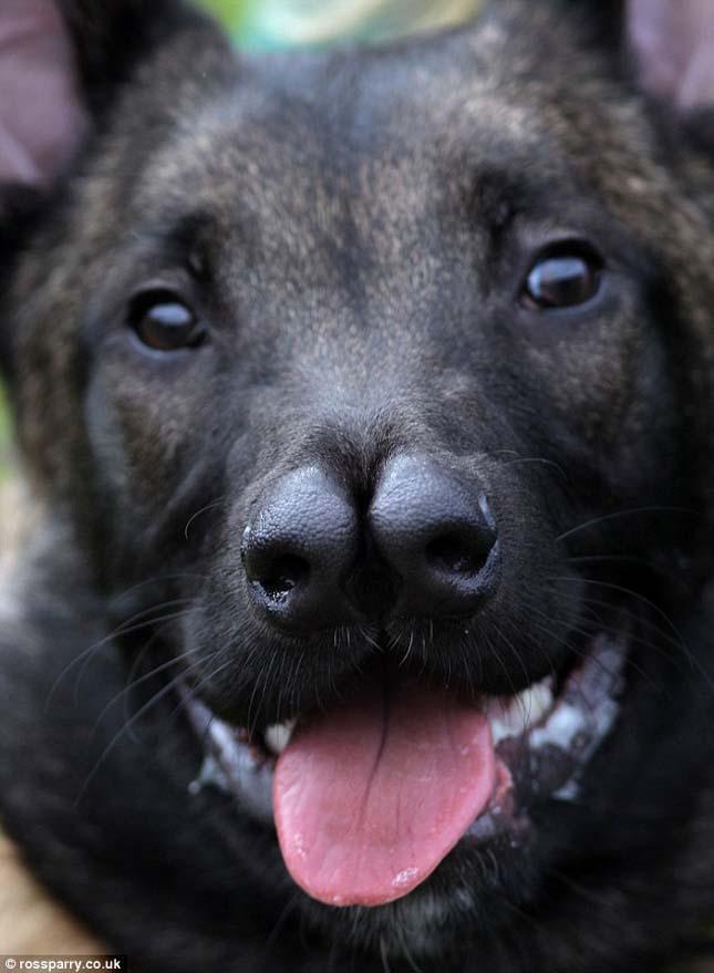 Snuffles, a két orrú kutya