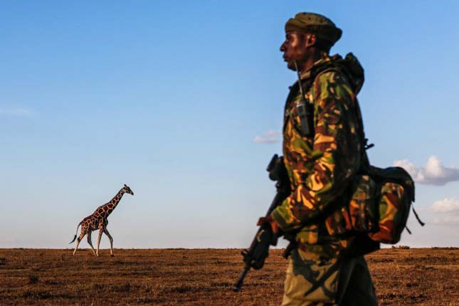 Sudan, a világ utolsó hím fehér orrszarvúja