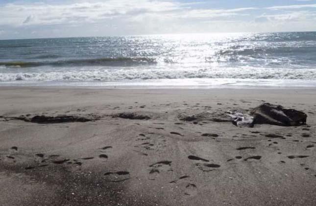 Furcsa, ijesztő állatot találtak Új-Zéland partján