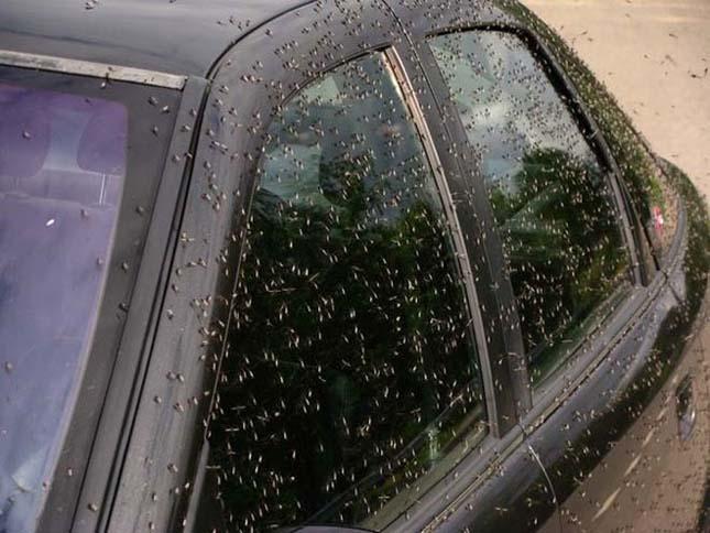 Hatalmas szúnyog raj invázió egy orosz faluban