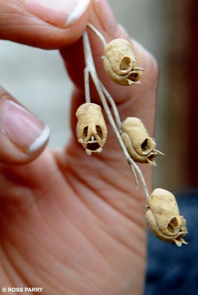 Tátika koponya alakú magháza