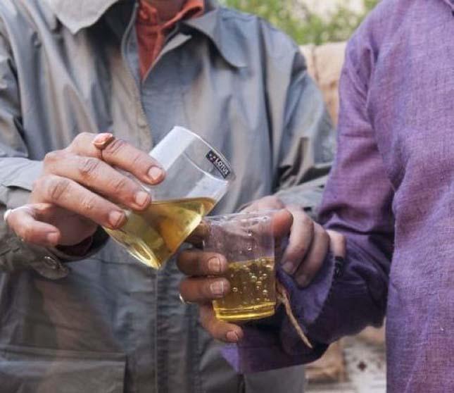tehénvizelet ivása