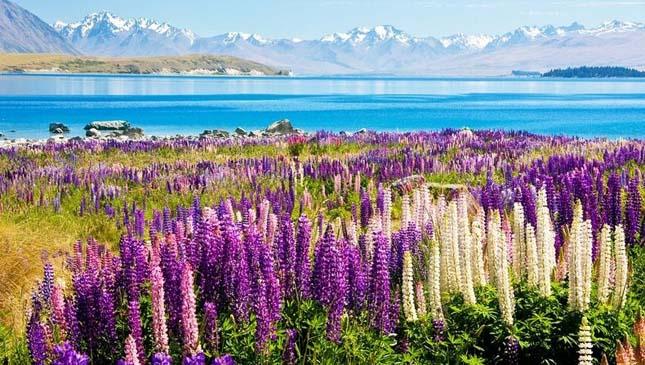 Tekapo-tó, Új-Zéland