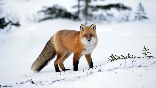 Az állatok télen