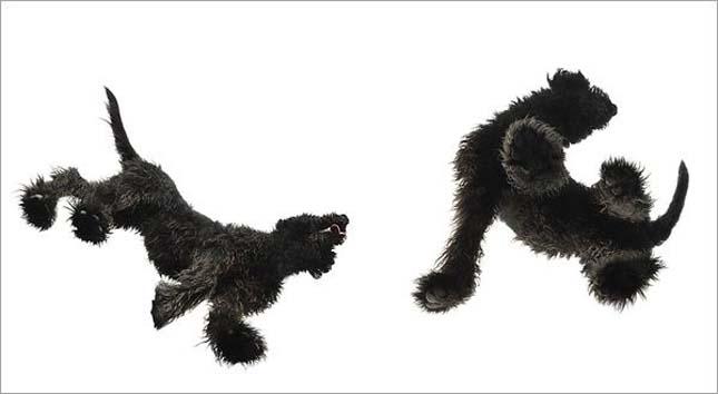 Tim Flach - kutyák