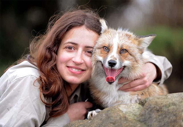 A róka, aki kutyának képzeli magát