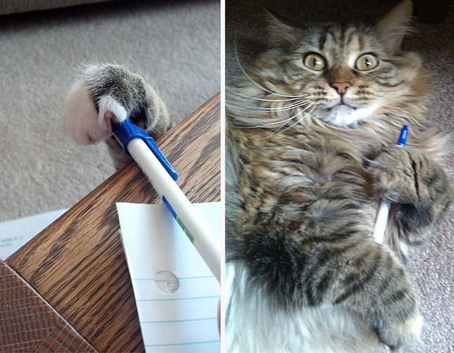 Tolvaj macskák