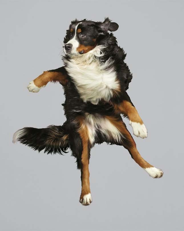 Ugráló kutyák