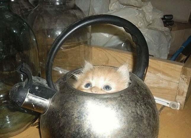 Macskák kis helyen