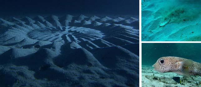 Rejtélyes víz alatti körök