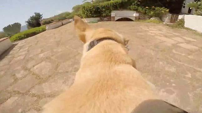 Walter, a labrador