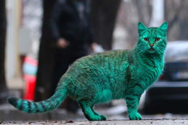 Zöld macska