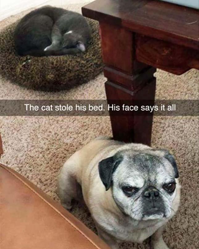 Ágyfoglaló macskák