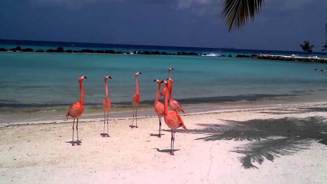 Flamingók tengerpartja