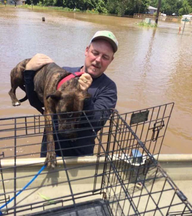 Árvízből kimentett kutyák